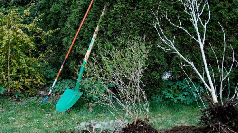 spatola per giardinaggio