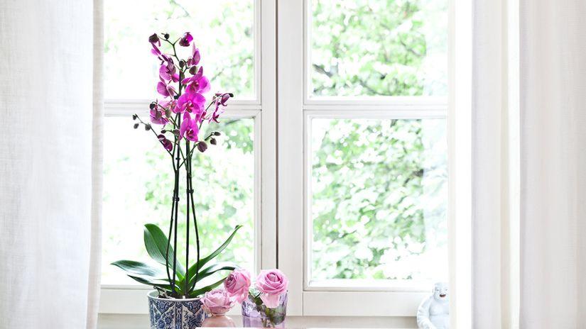 idee romantiche per san valentino orchidea