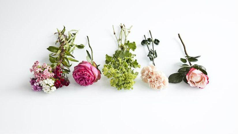 linguaggio dei fiori fiori stabilizzati