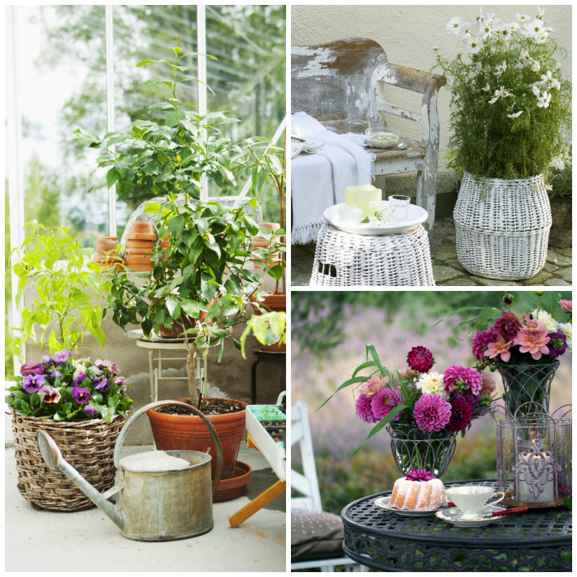 vasi da giardino piante