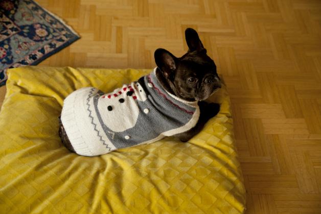 Cuscini per cani comfort e stile per i vostri cuccioli for Cuscini per cani taglia grande