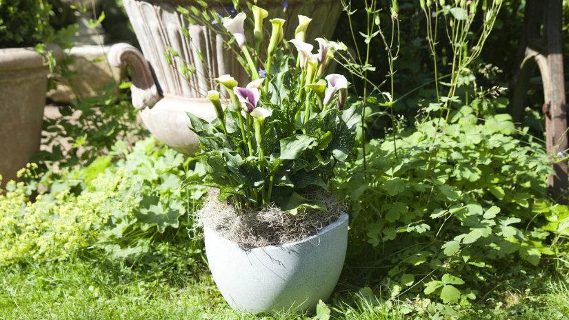 fioriere in cemento giardino