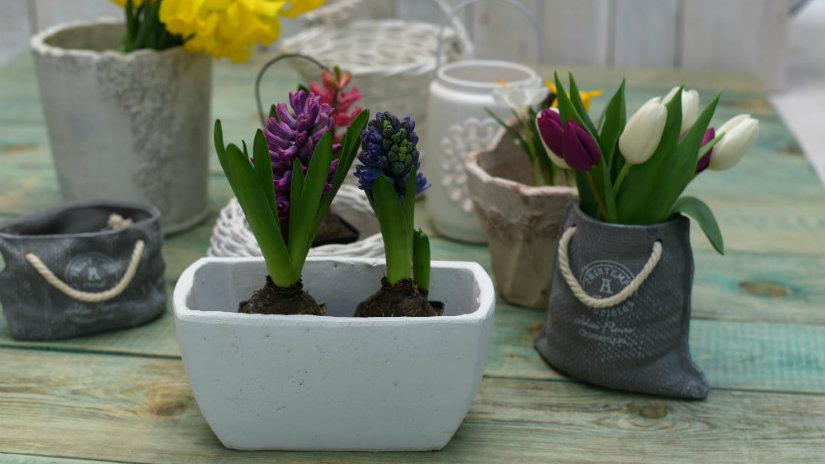 fioriere in cemento fiori bulbi