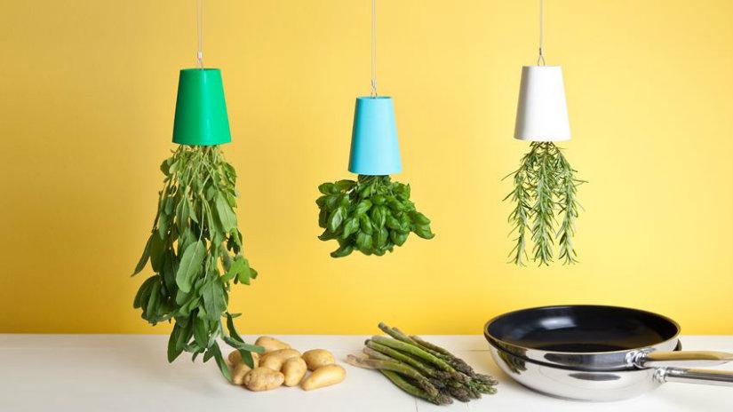 tende gialle carta da parati piante cucina