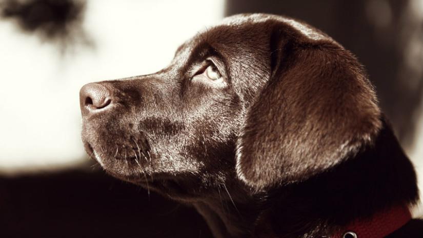 ciotole per cani