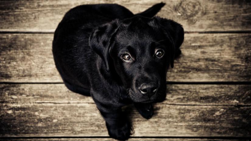 ciotola per cane