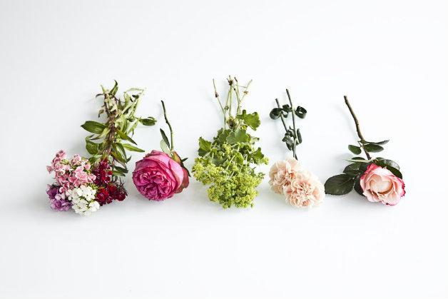 Immagini delle quattro stagioni