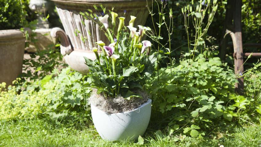 Vasi grandi fascino ed eleganza in giardino dalani e for Giardino casa classica