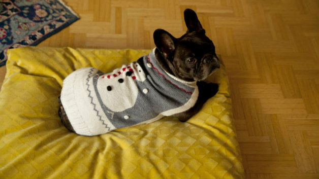 accessori per cani e gatti