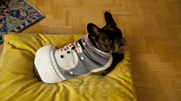 Cuccia per cani in stoffa o in legno westwing dalani e ora westwing - Cuccia per cani interno ...