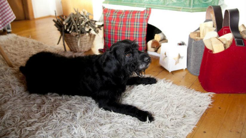 cuscini per cani grandi cuscini per cani cane tappeto