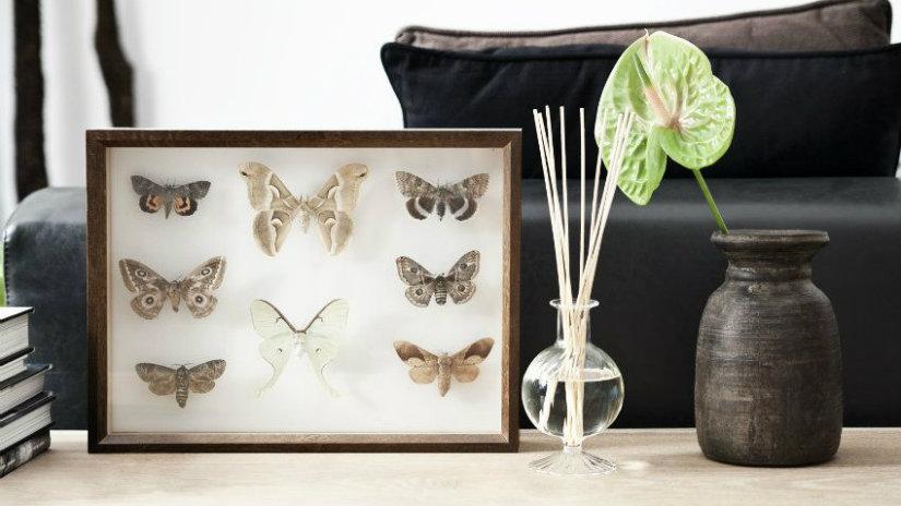 cornici classiche farfalle vasetto