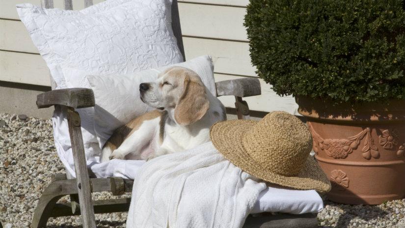 cuscini per cani grandi cuscini per cani sedia cane