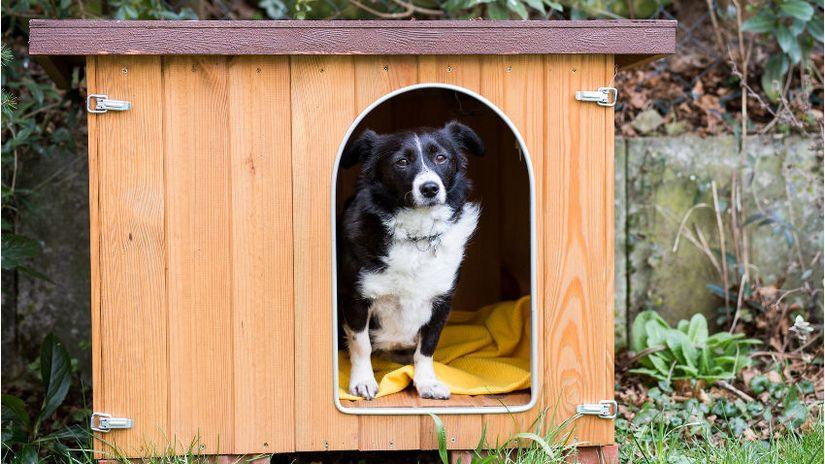 cuscini per cani grandi cuscini per cani cuccia cane