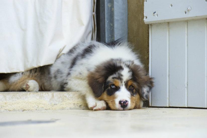 cuscini per cani grandi cuscini per cani cane