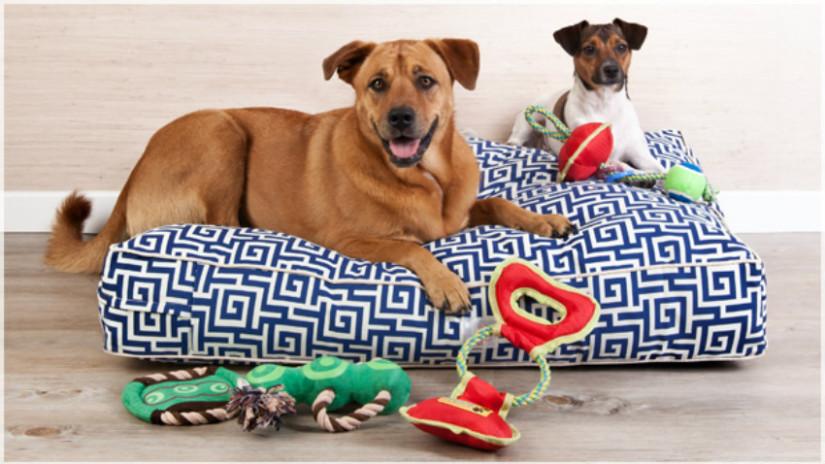 divani per cane cani giochi