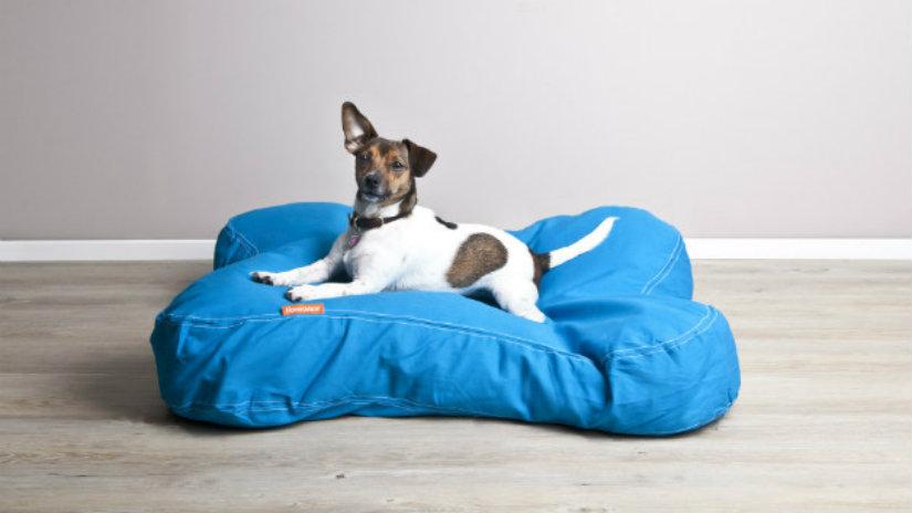 divani per cane cane