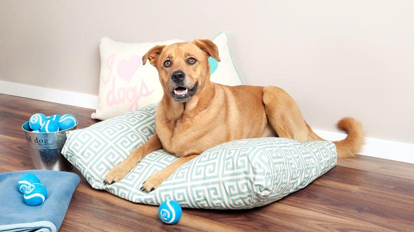 divani per cani cuscino cane