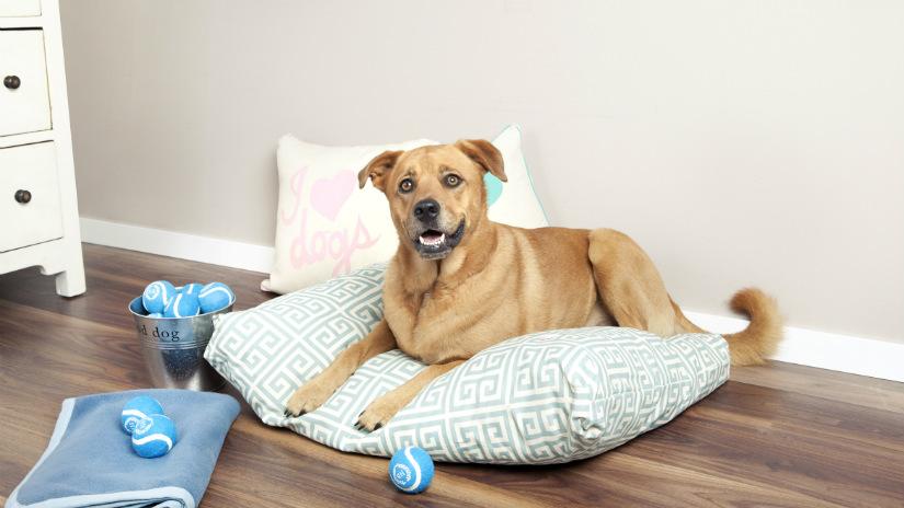 Cuccia per cani in stoffa o in legno westwing dalani for Cucce da interno per cani taglia grande