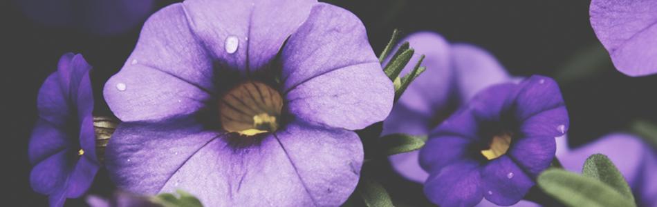 IL_SIGNIFICATO_DEI_COLORI_bnr_violet_2