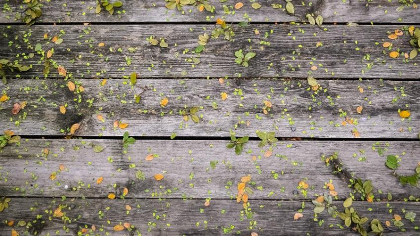Carta da parati effetto legno sensazioni di vacanza for Carta da parati per casa