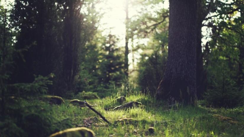 carta da parati con alberi