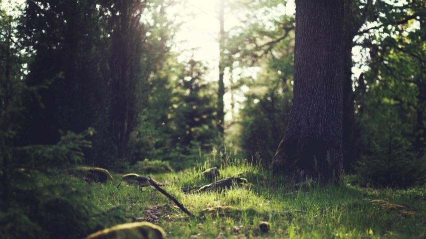 carta da parati con bosco