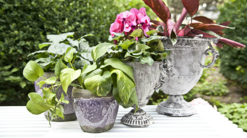 giardino piccolo vasi