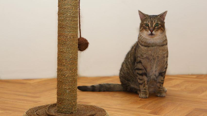 kat met kattenspeeltje