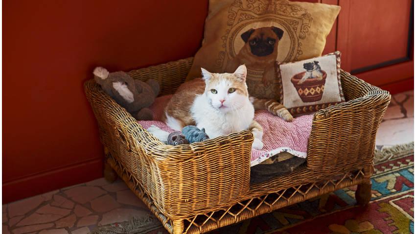 Kat in een rieten mand