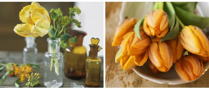 bladhark lente tulpen oranje geel vaasjes