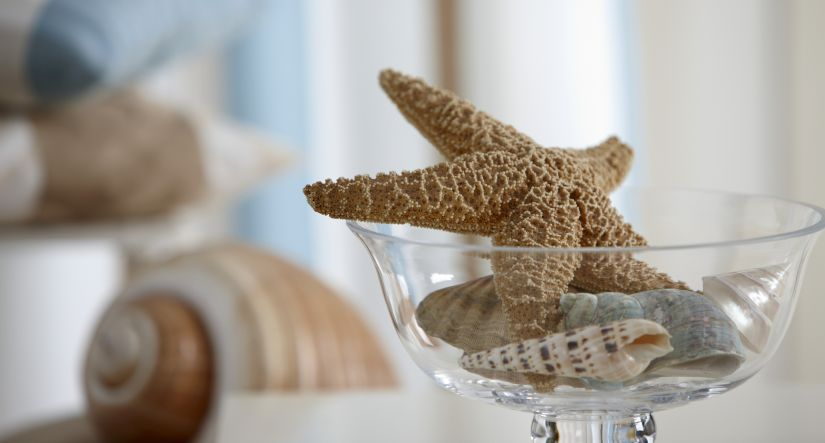 schelpenkrans schelpen in zeester in glazen vaas