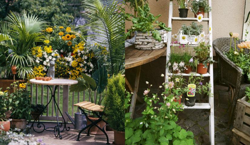 Ogród Na Balkonie Krok Po Kroku Pomysły I Inspiracje