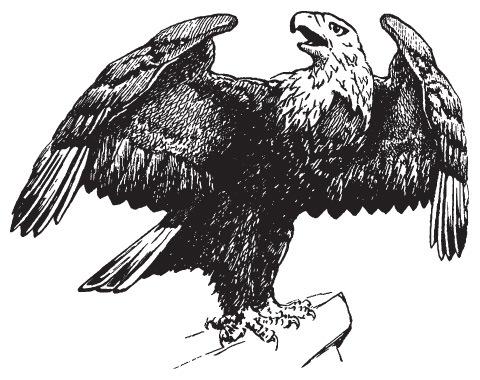 Truman Black Eagle
