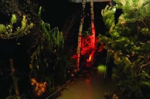 Karl Sadler's Forest installation