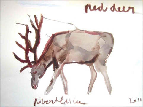 Red deer by Robert Clarke