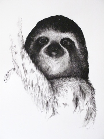a very cute sloth