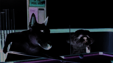 still from animated documentaries - Gould, Get Well Soon