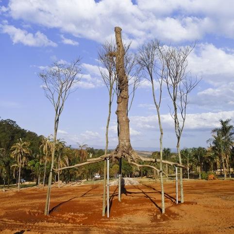 Giuseppe Penone, Elevazione bronze 5 guarita trees