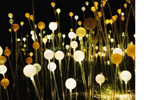 Bulbs in the Field of Light