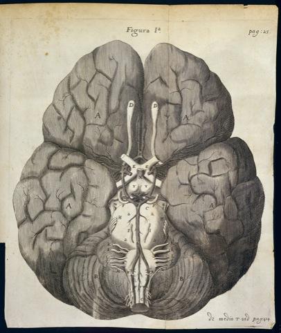 T Willis, Cerebri Anatome
