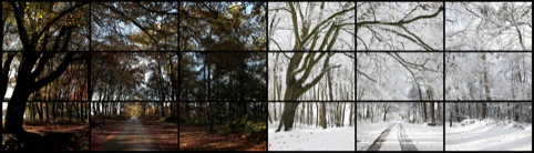 David Hockney Nov. 7th, Nov. 26th 2010, Woldgate Woods, 11.30 am and 9.30 am  Film still
