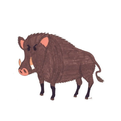 Wild boar, by Miss Lotion and Thomas