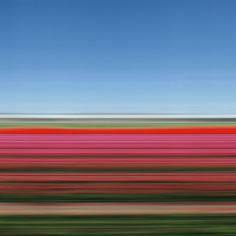 Rob Carter, Tulip Fields Holland XIV