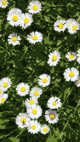 Daisies 2012, Continuous computer animation