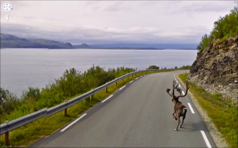 A reindeer running down Rv888, Finnmark, Norway, 2010.