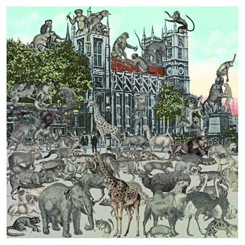 Animalia 2012