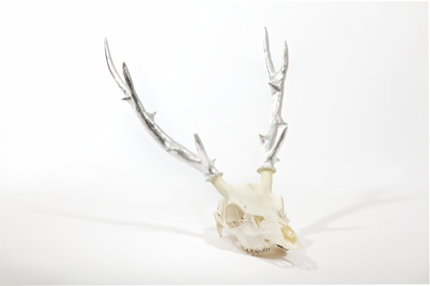 Deer head, Lauren Baker