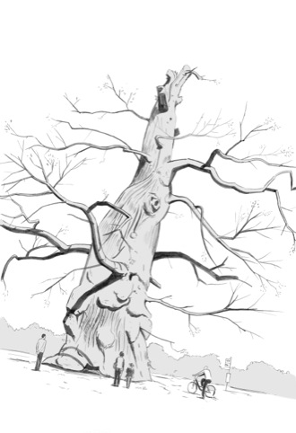 London's Ancient Trees, by Ben Mills