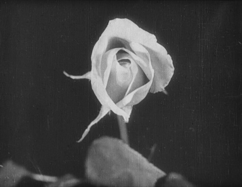 Birth of a Flower, director Percy E Smith, 1910